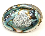 Abalone Shell - 3 to 4